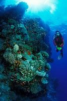 Scuba Diving in Sinai, Sharm el Sheikh, Sinai, Red Sea, Egypt