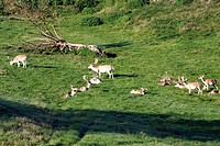 France, Limousin, Evraux les Bains, park of the deers