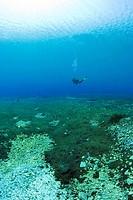 scuba diver in the lago di Capo D´Acqua, Lago di Capo d´Acqua, Abruzzo, Italy
