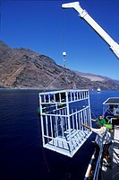loading the shark cages, to watch the great white shark, Carcharodon carcharias, Guadalupe Island, Pacific Ocean, Mexico