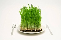 Grass served on a plate, with knife and fork
