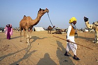 Pushkar Camel Festival, Rajasthan, India