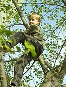 boy, tree, climbing, ,