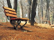 Bench in the forest (thumbnail)