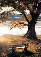 bench beside tree in the river bank