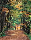 Avenue in autumn (thumbnail)