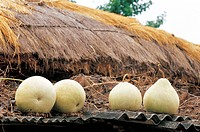 Korean traditional architecture, gourd on thatched cottage
