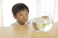 Little boy looking at goldfish swimming in their bowl