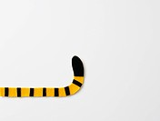Felt tiger´s tail, white background, copy space