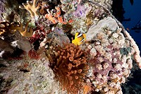 ocean, coral and a red anemone