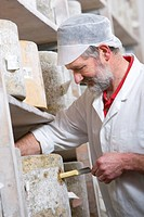 Cheese maker using cheese iron to take sample of farmhouse cheddar