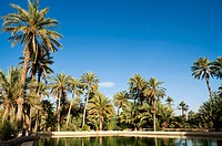 Water tank, Date Palm oasis, Figuig, province of Figuig, Oriental Region, Morocco