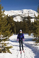 lake louise, alberta, canada, cross country skier on a trail with a mountain in the background