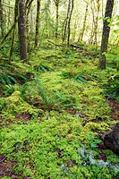 green foliage on the forest floor