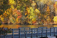 Knoxville, Tennessee, United States Of America, Trees Along The Shoreline In Autumn And A Wooden Bridge