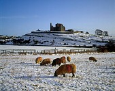 Sheep On A Snow Covered Landscape In Front Of A Castle, Rock Of Castle, Castle, County Tipperary, Republic Of Ireland