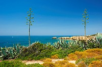 Algarve, Portugal, outside, Praiha there Coelha, coast, seashore, coastal scenery, scenery, nature, Praiha there Coelha, plants, agaves