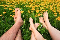 3, 6, leg, flowers, flower field, Flower meadow, Blossom, Flourish, Smell, Relaxation, rest, adults, family, field, woman, wife, freedom, spring, feet...