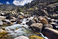 Throat Tejea in the Sierra de Gredos Castilla León Spain