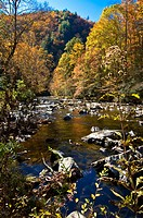 River and colourful foliage in the Indian summer, Great Smoky Mountains National Park, UNESCO World Heritage Site, Tennessee, United States of America...