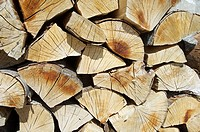 group of pine logs cut