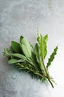 Fresh sage, rosemary, and bay leaves (thumbnail)