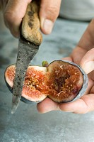 Cutting a ripe fig