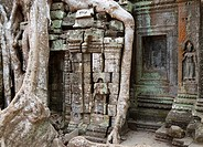 Cambodia - The roots of a Kapok tree Ceiba petandra invade a gallery at the Ta Prohm temple in Angkor, supporting the monument and destroying it at th...