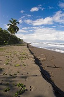 Beach of the Caribbean coast - Tortuguero (thumbnail)