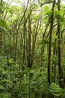 Rainforest _ Monteverde reserve