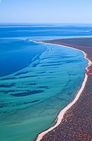 West _ Shark Bay