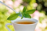 Sweet plant Stevia rebaudiana