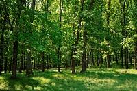 Forest, Strandzha, Bulgaria