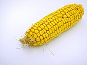 Corncob on white background