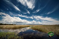 Tablas de Daimiel National Park, protected lagoons in southern Spain, home to many migratory birds. Ciudad Real province, Spain