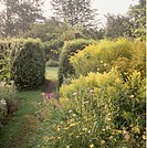 Hedges in large country garden in summer