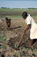 cultivating, people, girls, zambia, person, food