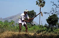 person, cultivating, tangaya, india, people