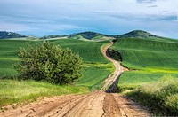 A summer road in the Palouse near Tekoa, Washington