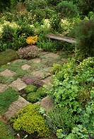 Stone paving in scented herb garden