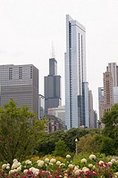 Buildings in Chicago Illinois Skyline include Sears Tower Photographed from Lurie Garden in Millennium Park