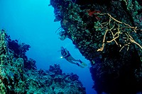 Diver at Reef, Caribbean Sea, Bahamas
