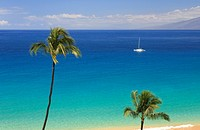 Palm_lined Beach on Hawaii, Maui, Pacific, Hawaii, USA