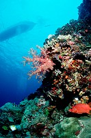 Diving Boat over Reef, Pacific, Micronesia, Palau