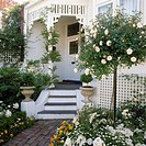 White painted verandah and exterior of house with all white garden in front with standard rose