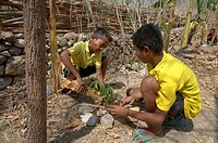 child school children timor leste tending trees