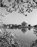 USA, Washington D.C., The Jefferson Memorial framed by cherry blossoms across the tidal basin in spring