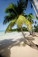 Dominican Republic, Caribbean, Samana Peninsula, El Portillo Beach, beach, palm trees, ocean