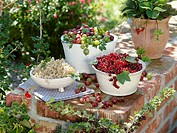 Bowls of red_ and white currants and gooseberries, strawberry plant