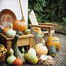 Pumpkins and squashes autumn decorations